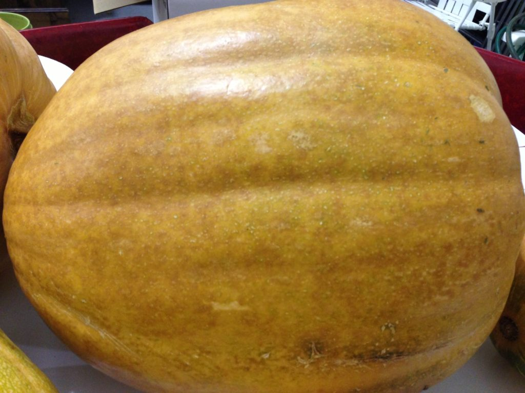Dickinson pumpkin for Throwback Brewery Gourdgeous Ale