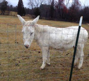 soggy donkey