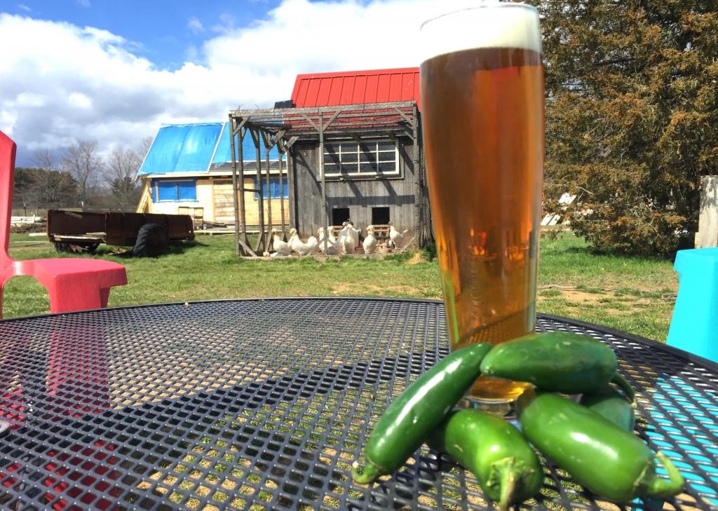 Spicy at Throwback Brewery at Hobbs Farm
