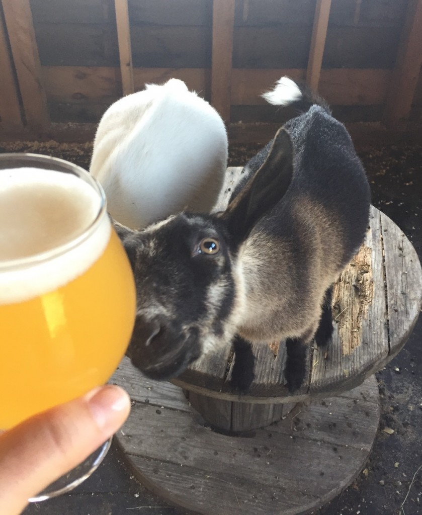 Dorothy and Throwback Brewery's Light All Night